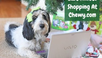 My GBGV Life Last Minute Gift Shopping #ChewyInfluencer