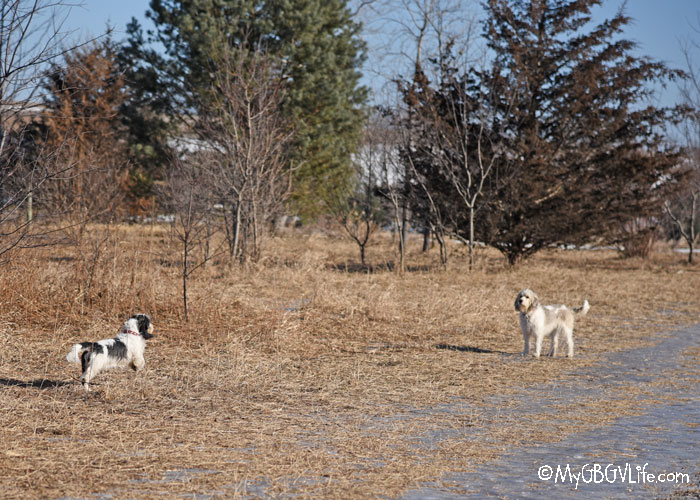 My GBGV Life My First Visit To Cleary Lake Dog Park Was A Winner!