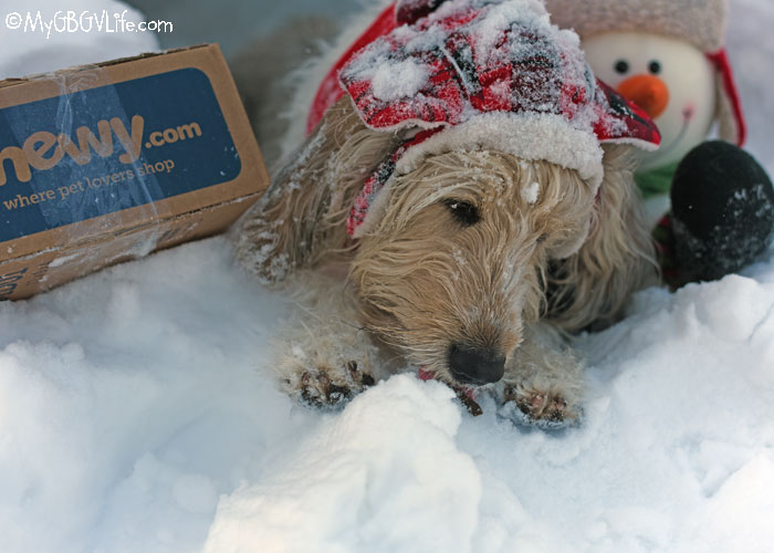 My GBGV Life Snow Cave Hunger Is A Real Thing - #ChewyInfluencer