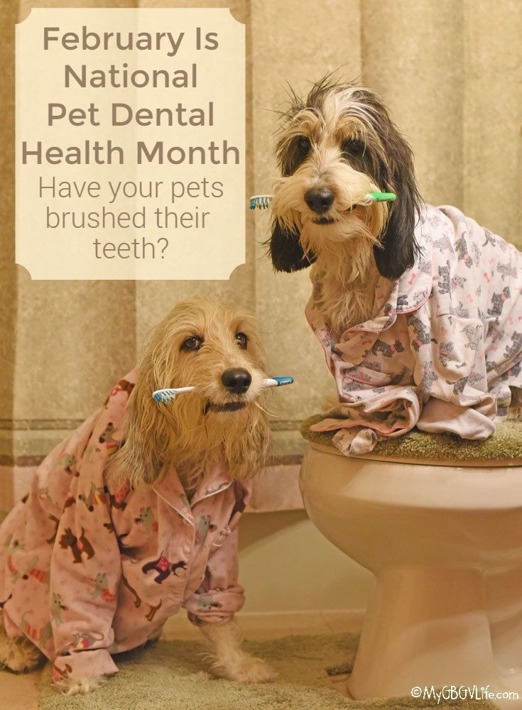 Pet Dental Health Month - How Are Your Dog's Teeth?