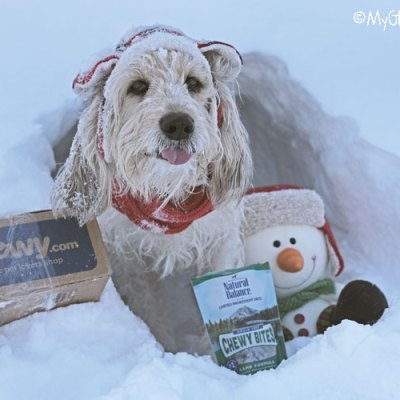 Snow Cave Hunger Is A Real Thing #ChewyInfluencer