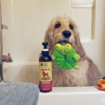 Spring Cleaning The Dog – The Fear A Bath Is Near