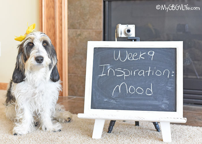 My GBGV Life Inspiration - Mood You Are Feeling Today #DogwoodWeek9