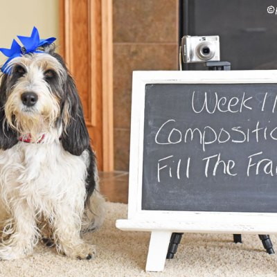 Composition – Fill The Frame #DogwoodWeek11
