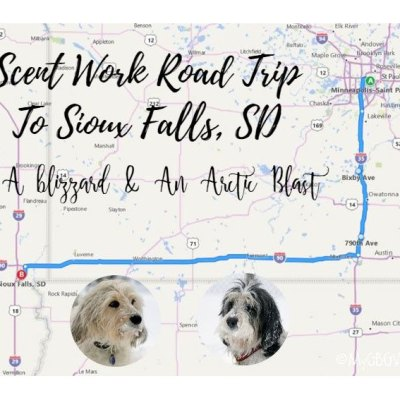 My GBGV Life A Real Winter Scent Work Road Trip To Sioux Falls