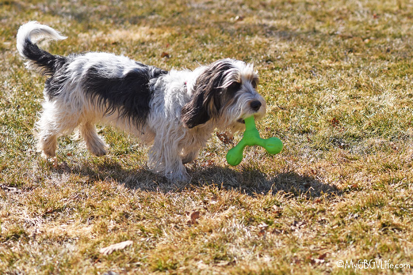 My GBGV Life Skamp? A Dog Toy Made To Be Scampered With