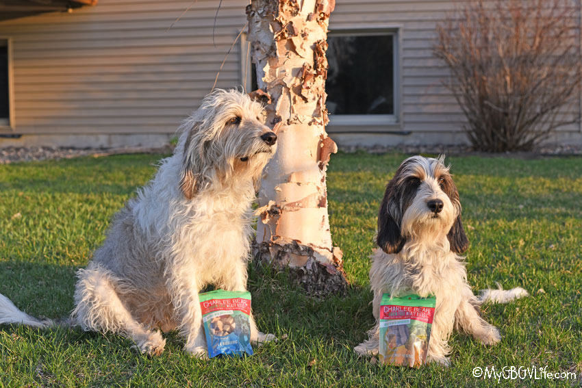 My GBGV Life The Ultimate Healthy Snack For Your Dog
