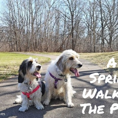 Spring Has Sprung But Caution – Speed Bump Ahead