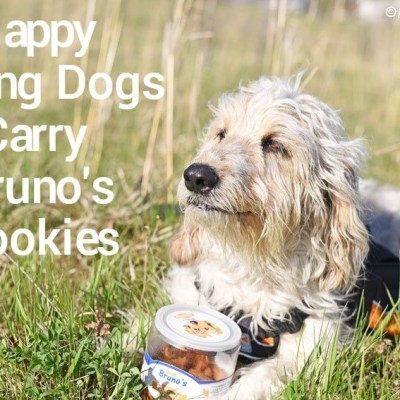 Happy Hiking Dogs Carry Bruno's Cookies In Their Backpack