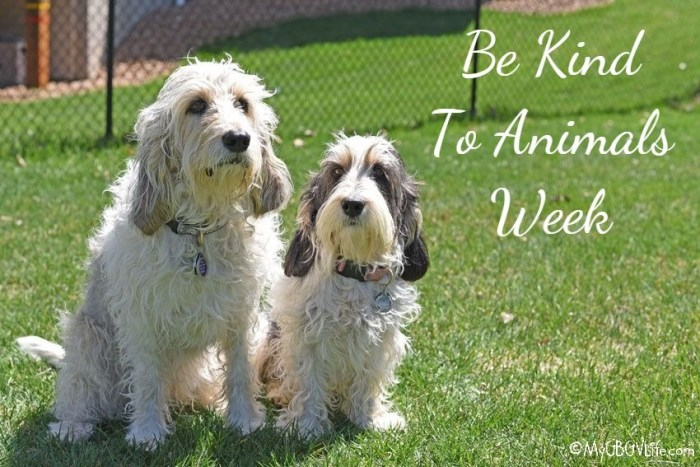 Be Kind To Animals Week – What Can You Do?