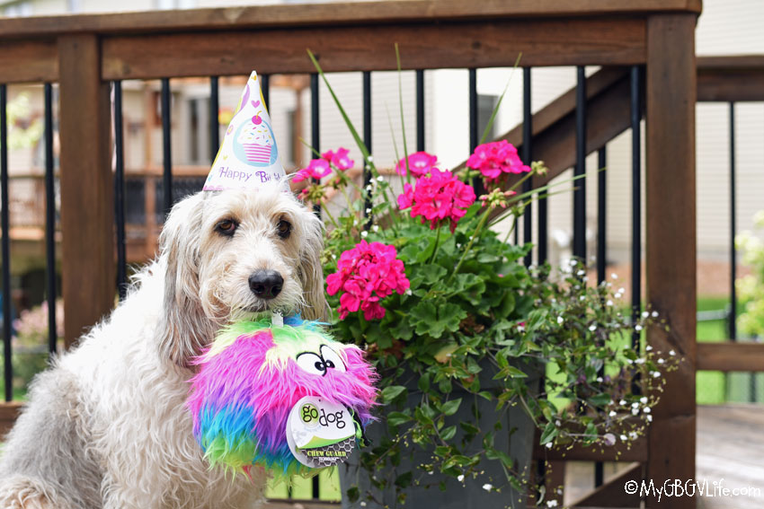 My GBGV Life Birthday Festivities