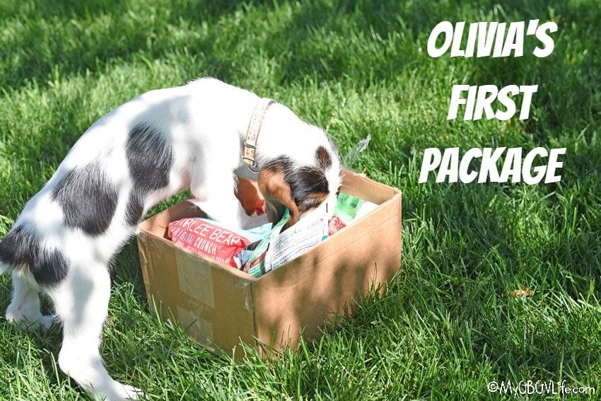 My GBGV Life A Gift For The New Puppy - Olivia's First Package