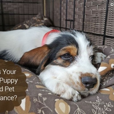 Does Your New Puppy Need Pet Insurance?