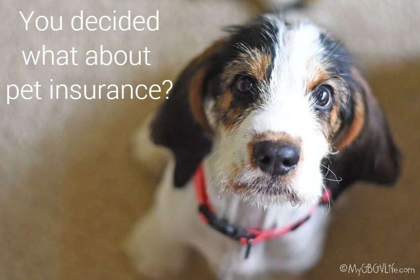 My GBGV Life Does Your New Puppy Need Pet Insurance?