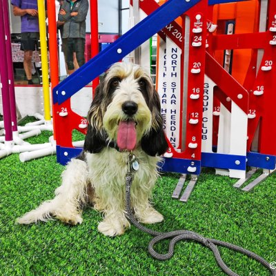 On Friday I Retired From Agility After A Year of Competing