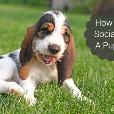 How To Socialize A Puppy And Why It's Important