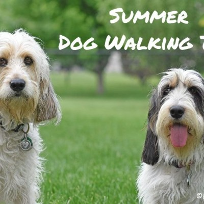 Summer Dog Walking Tips- Watch The Heat