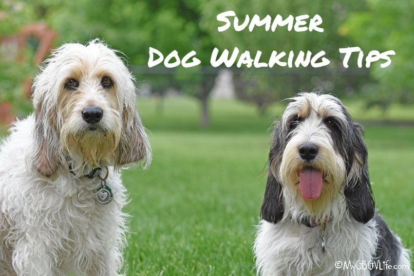 My GBGV Life Summer Dog Walking Tips- Watch The Heat