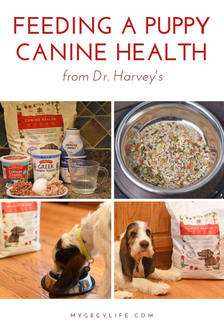 My GBGV Life Feeding A Puppy Canine Health From Dr Harvey's