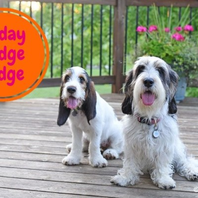Welcome To The Friday Hodge Podge Report
