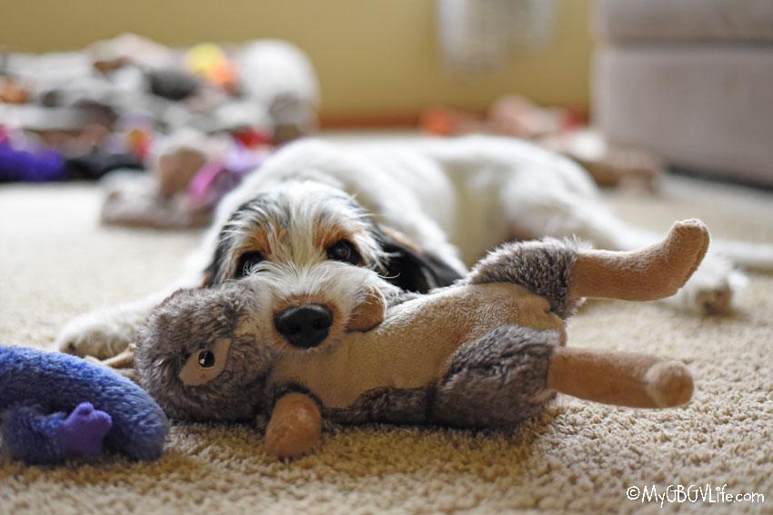 My GBGV Life Olivia with rabbit