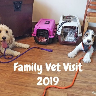 The Annual Family Vet Visit 2019 Was Very Different