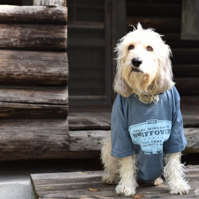 Honoring Dogs We Have Lost At The Sniffover