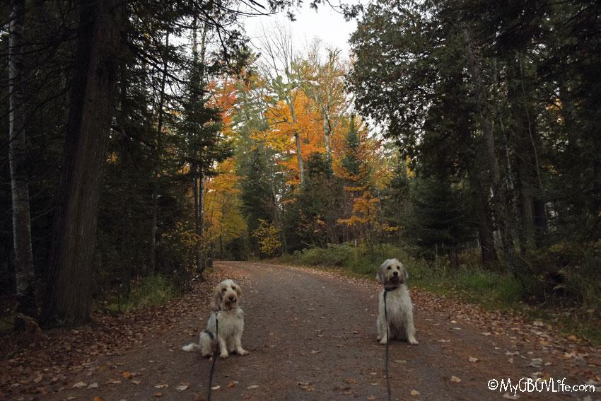 My GBGV Life morning walk