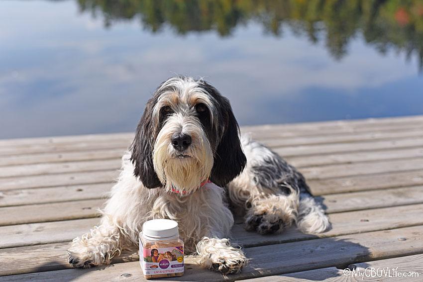 My GBGV LIfe Madison on the dock with treats