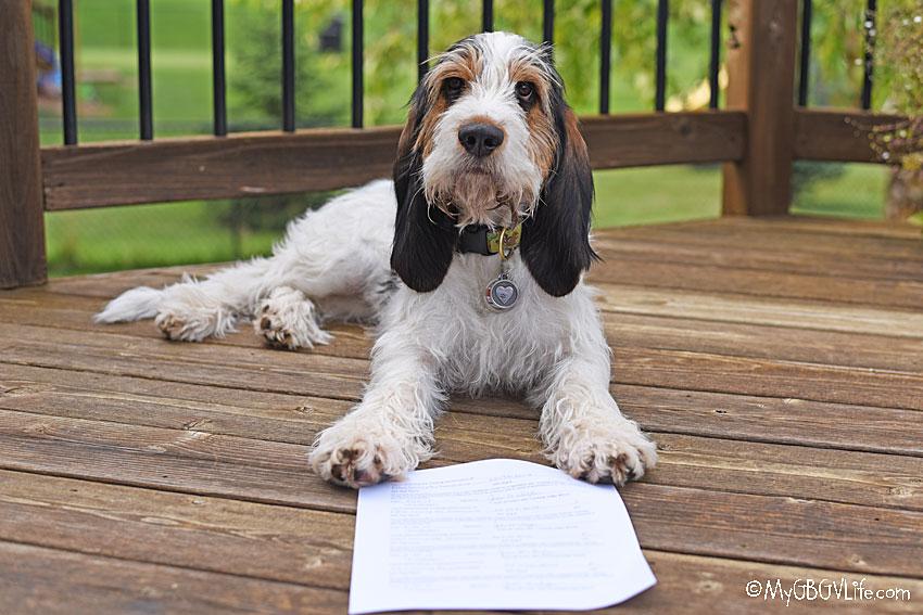My GBGV Life proud hound
