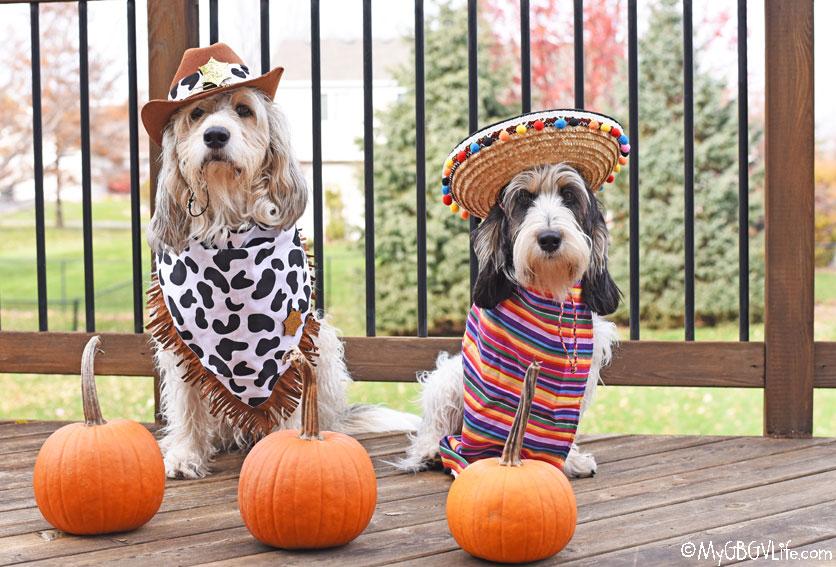 My GBGV Life dog Halloween costumes