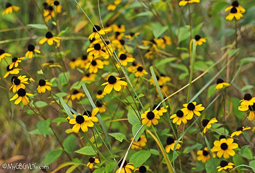 My GBGV Life fall flowers