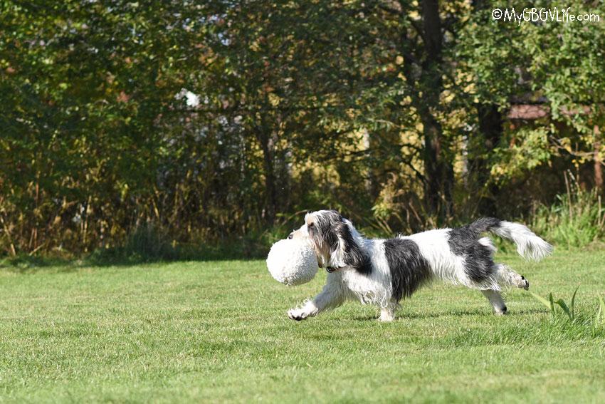 My GBGV Life Madison as dog trainer