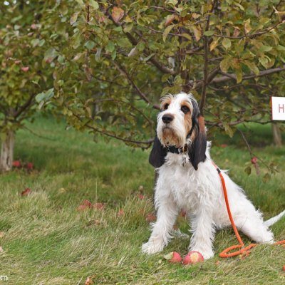 Turning Seven Months Old With Photos At The Apple Orchard