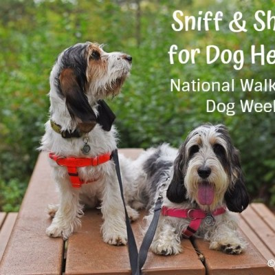 Sniff And Shake For Dog Health – National Walk Your Dog Week