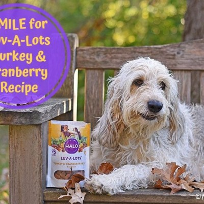 Smile for Luv-A-Lots Turkey & Cranberry Recipe This Fall