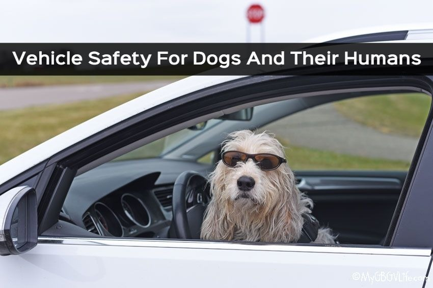 My GBGV Life Vehicle Safety For Dogs And Their Humans