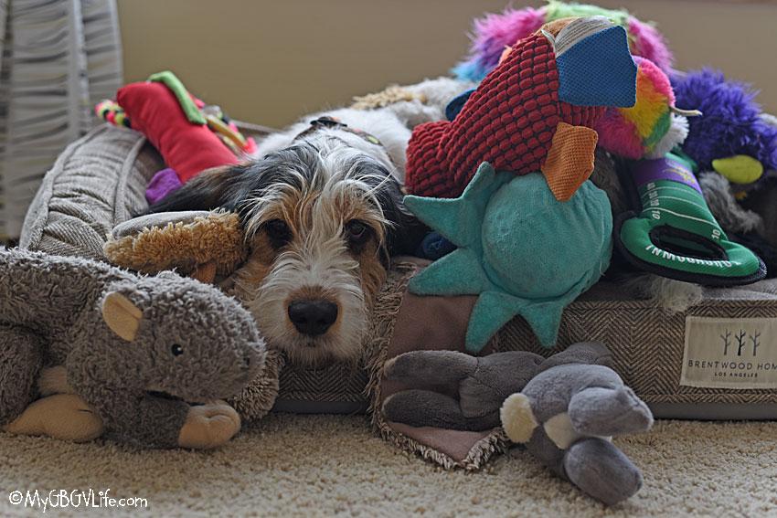 My GBGV Life Olivia in toys