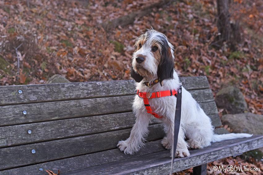 My GBGV Life Olivia on the bench