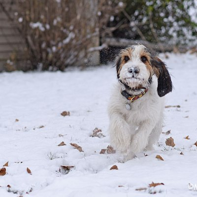 A Puppy's First Snow Is The Best Snow