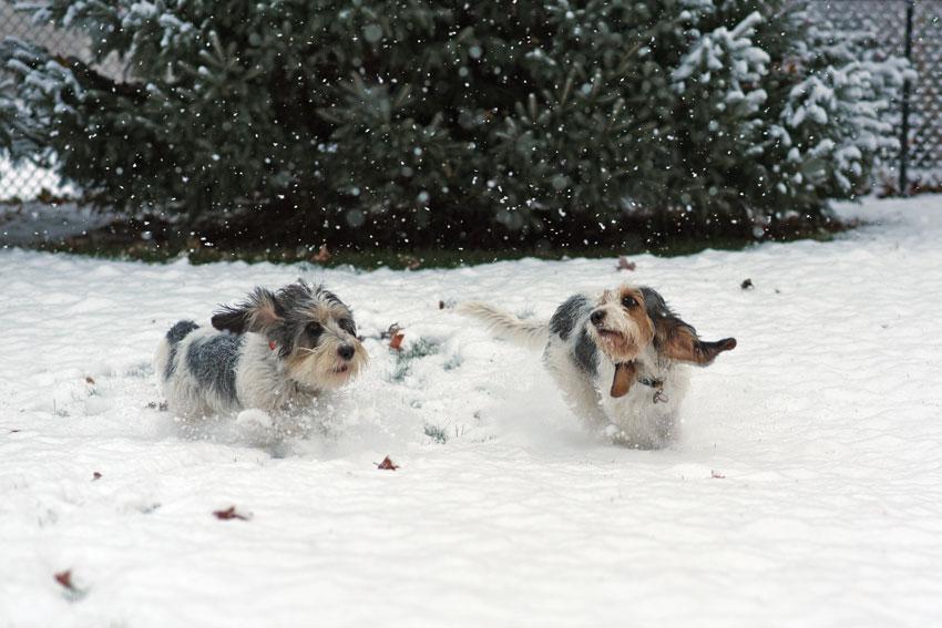 My GBGV Life racing in snow