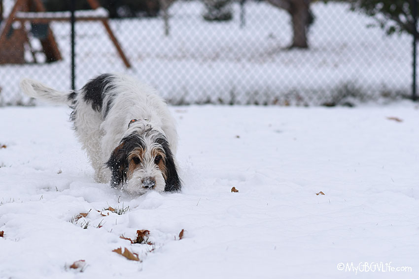 My GBGV :Life snow sniffing