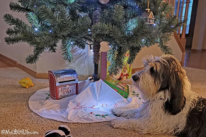 My GBGV Life Madison under the tree