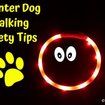 7 Winter Dog Walking Safety Tips