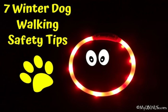 7 Winter Dog Walking Safety Tips