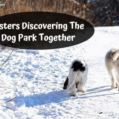 My GBGV Life Sisters Discovering The Dog Park Together