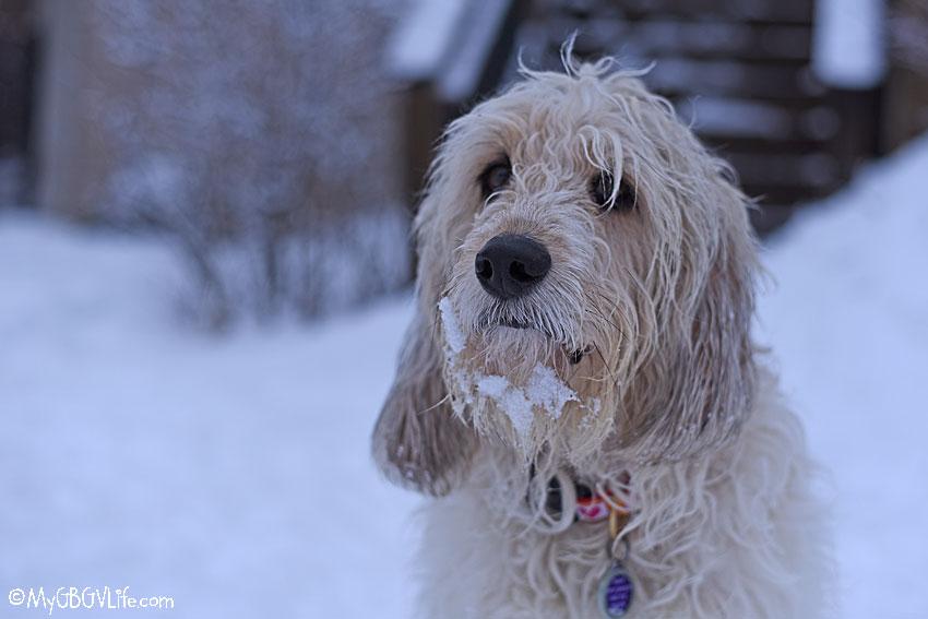 My GBGV Life Bailie snow beard