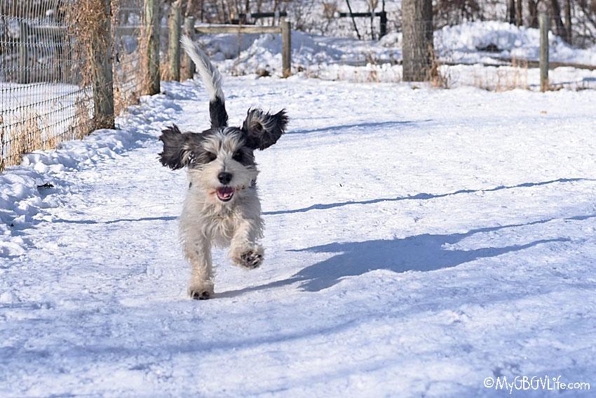 My GBGV Life Madison running