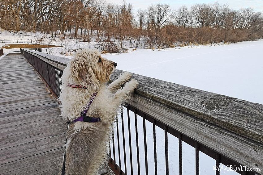 My GBGV Life looking at the lake