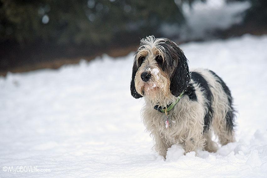 My GBGV Life snowy Madison
